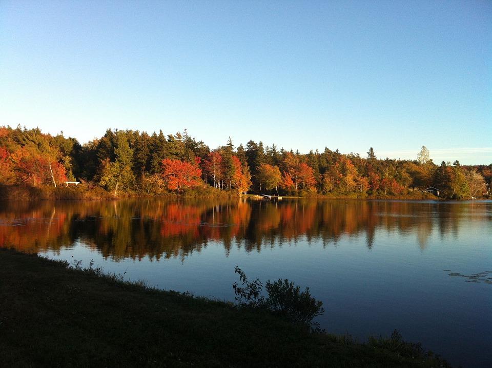Nova Scotia Trees Large